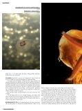 Havsleguaner - Kamera & Bild - Page 5