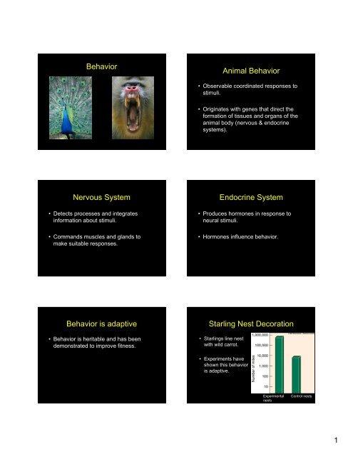 Behavior Animal Behavior Nervous System Endocrine System