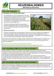 Reuzenbalsemien (pdf) - Agentschap voor Natuur en Bos