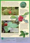 bær-ark - Norges Naturvernforbund - Page 2