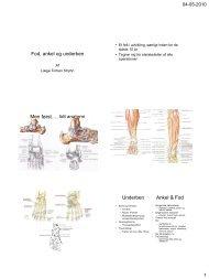 Men først…. lidt anatomi