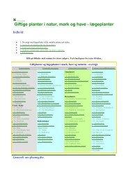 Giftige planter i natur, mark og have - lægeplanter - Abild Dyreklinik