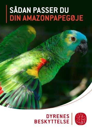 SÅDAN PASSER DU DIN AMAZONPAPEGØJE - Dyrenes Beskyttelse