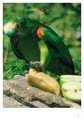 SÅDAN PASSER DU DIN AMAZONPAPEGØJE - Dyrenes Beskyttelse - Page 5