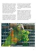 SÅDAN PASSER DU DIN AMAZONPAPEGØJE - Dyrenes Beskyttelse - Page 7