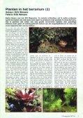 Planten in het terrarium - Tuinbedrijf Erik Wevers - Page 2