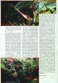 Planten in het terrarium - Tuinbedrijf Erik Wevers - Page 3