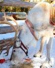 Living's - Scandinavian Wintersports - Page 3