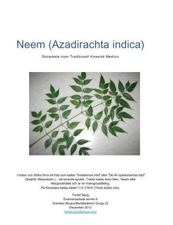 Neem (Azadirachta indica) - Akupunkturakademin