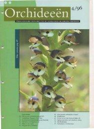 1996 - 4 - Orchideeën Vereniging Vlaanderen