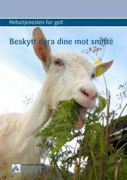 Brosjyre smittevern.pdf - Helsetjenesten for geit - Tine