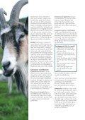 Brosjyre smittevern.pdf - Helsetjenesten for geit - Tine - Page 6