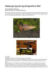 Hur JAG gör för att fotografera fiskar - Vestsjællands Akvarie- og ...