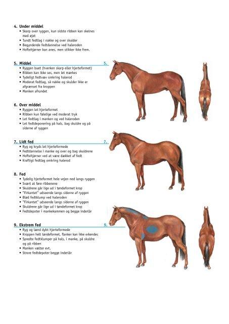 Huldvurdering på heste - Dyrenes Beskyttelse