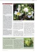 På udkig efter skadedyr i solbær - Gartneribladene - Page 5