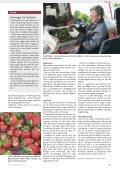 På udkig efter skadedyr i solbær - Gartneribladene - Page 7