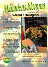 Månadens blomma 10 - Mäster Grön