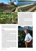 Trädgård på taket Läckö slottsträdgård Ekologisk ... - Monarda - Page 7