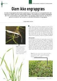 Glem ikke engrapgræs - Turfgrass