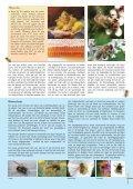 Bijenzaken aan ons hoofd - Phytofar - Page 5