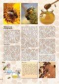 Bijenzaken aan ons hoofd - Phytofar - Page 6