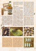 Bijenzaken aan ons hoofd - Phytofar - Page 7