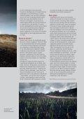 Zwarte duinen bij Schoorl - Page 2