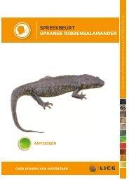 Download de spaanse ribbensalamander spreekbeurt - Kids - Licg