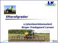 Efterafgrøder, ved planteavlskonsulentBirger - LandboNord