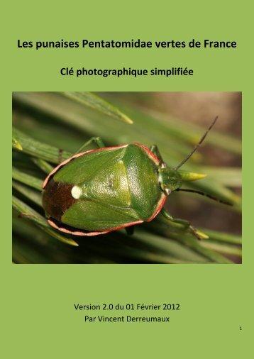 Les punaises Pentatomidae vertes de France - Galerie du Monde ...