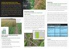 aramo bloembollen - Certis Europe - Page 2