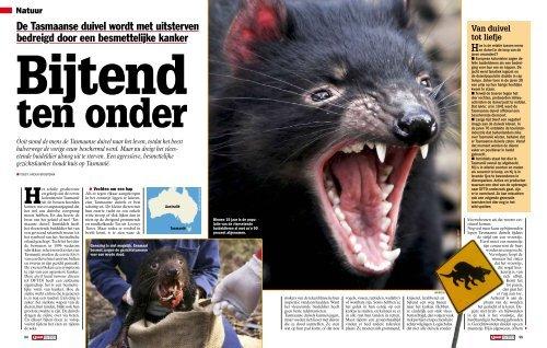 De Tasmaanse duivel wordt met uitsterven bedreigd door een ...