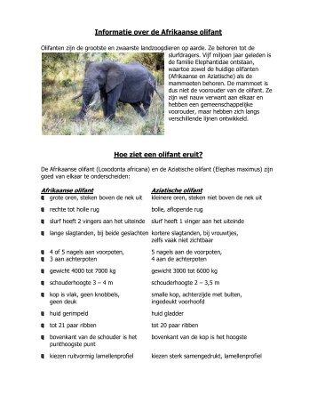 Informatie over de Afrikaanse olifant Hoe ziet een olifant eruit? - Perrit