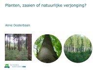 Planten, zaaien of natuurlijke verjonging?