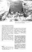 tijdschrift voor zoogdierbescherming en zoogdierkunde - Page 5