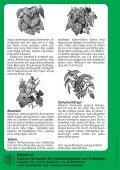 Fleråriga klättrare - Page 4