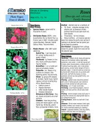 Rosa spp. and cultivars - University of Wisconsin-Extension