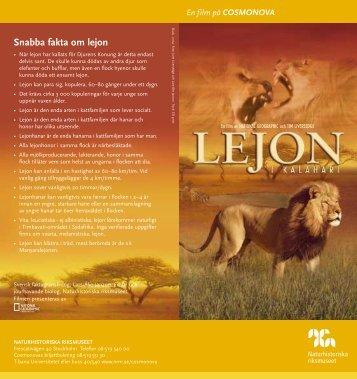 Snabba fakta om lejon