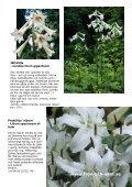 Jennys lyxlista våren 2012 Beställ för minst 600:- senast 4 mars - Page 4