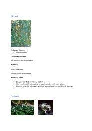 Overzicht eetbare planten en bloemen Waarderpolder Haarlem