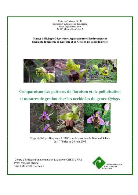 Comparaison des patterns de floraison et de pollinisation et ...