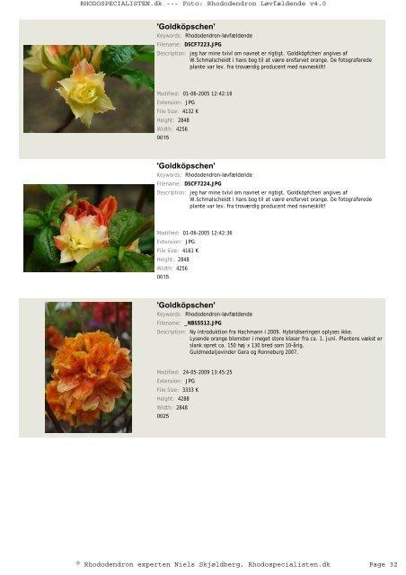 Rhododendron, løvfældende - Rhodospecialisten.dk