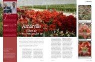 Bloemen & Planten 2010 - Fa. Gebr. van Velden