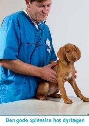 Den gode oplevelse hos dyrlægen - Zylkene