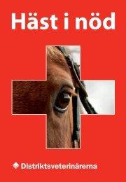 Häst i nöd - Distriktsveterinärerna