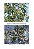 Planten - Eucalyptuskwekerij Koala - Page 4