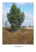 Planten - Eucalyptuskwekerij Koala - Page 7