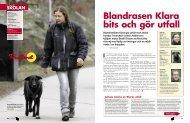 Blandrasen Klara bits och gör utfall - Fria Hundar