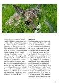 LAD DYREUNGERNE VÆRE - Dyrenes Beskyttelse - Page 5