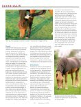 Staart- en maneneczeem - Dierenartsenpraktijk Moergestel - Page 2